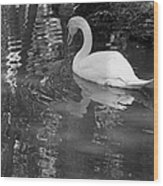 White Swan In Black And White II Wood Print