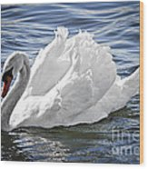 White Swan On Water Wood Print