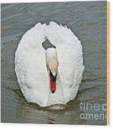 White Swan Swimming Wood Print