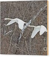 White Swans In Flight 1589 Wood Print