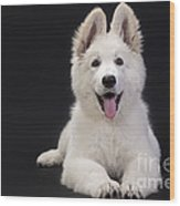 White Swiss Shepherd Dog Wood Print