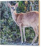 White Tail Deer Bambi In The Wild Wood Print