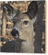 White Tailed Deer 1 Wood Print