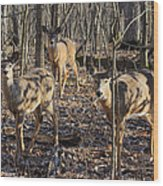 White Tailed Deer 2 Wood Print