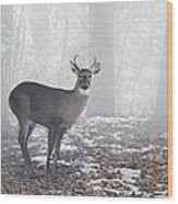 White Tailed Deer Buck In The Mist Wood Print