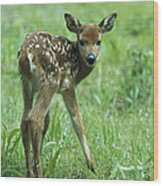White-tailed Deer Fawn Meadow Wood Print