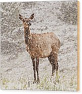 White Tailed Deer In Snow Wood Print