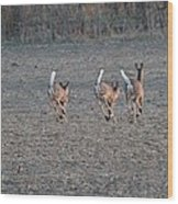 White Tailed Deer Running Wood Print