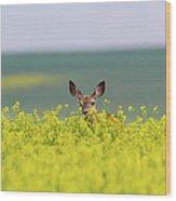 White-tailed Doe Wood Print