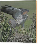 White-tailed Hawks At Nest Wood Print