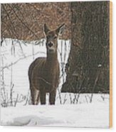 White-tailed Winter Stand  Wood Print