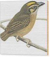 White Throated Spadebill Wood Print