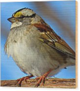 White Throated Sparrow And Blue Sky Wood Print