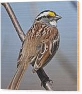 White-throated Sparrow Pictures 108 Wood Print