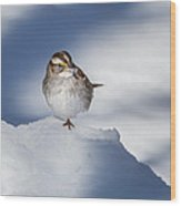White Throated Sparrow Square Wood Print
