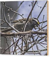 White-throated Sparrow With Berry Wood Print