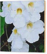 White Thunbergia On The Fence Wood Print