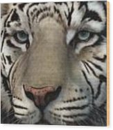 White Tiger - Up Close And Personal Wood Print