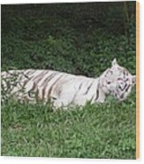 White Tiger 2 Wood Print