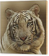 White Tiger II Wood Print