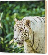White Tiger Portriat Wood Print