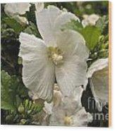 White Tree Flower Wood Print