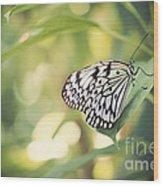 White Tree Nymph Wood Print by Juli Scalzi