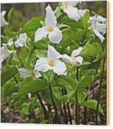 White Trillium Wood Print