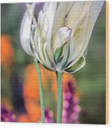 White Tulip Splash Of Color Wood Print