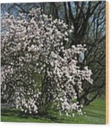 White Tulip Tree Wood Print