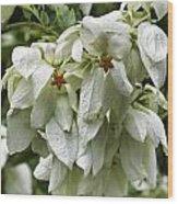 White Veil Of Tropical Flowers Wood Print