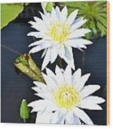 White Water Lilies Wood Print by Jeannette Wagner