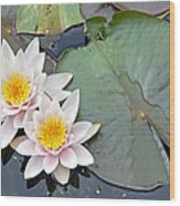White Water Lilies Netherlands Wood Print by Jelger Herder