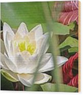White Water Lilly Or Lotus Flower Wood Print