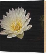White Water Lily 2 Wood Print