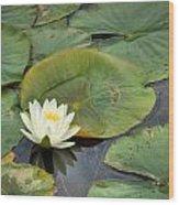 White Water Lily Wood Print by Matt Dobson