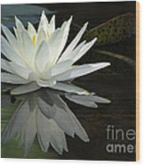 White Water Lily Reflections Wood Print