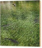 White Water Preserve Wood Print