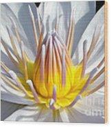 White Waterlily Wood Print