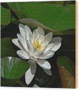 White Waterlily Lotus Wood Print