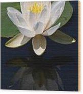 White Waterlily Reflection Wood Print