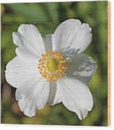 White Windflower Wood Print
