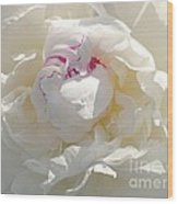 White With Red Peony Wood Print