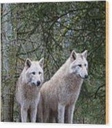 White Wolf Pair Wood Print