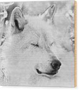 White Wolf Shut Eye Wood Print