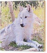 White Wolf Taking It Easy Wood Print