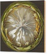 White Zinnia Button Wood Print