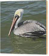 Whiteheaded Pelican Wood Print
