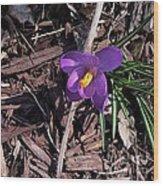 Whitehills Wood Print