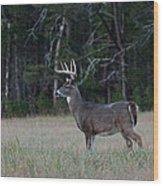Whitetail Buck 1 Wood Print